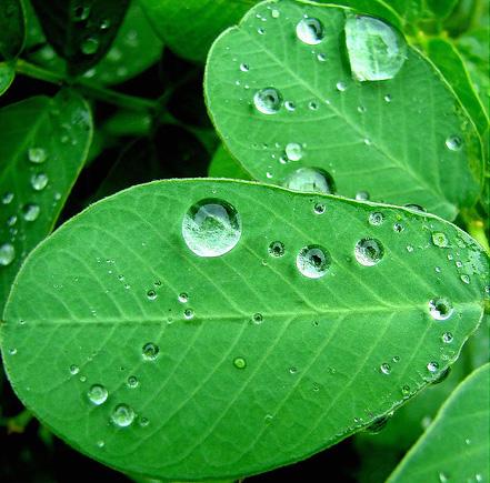 Wood Element - Green Leaf