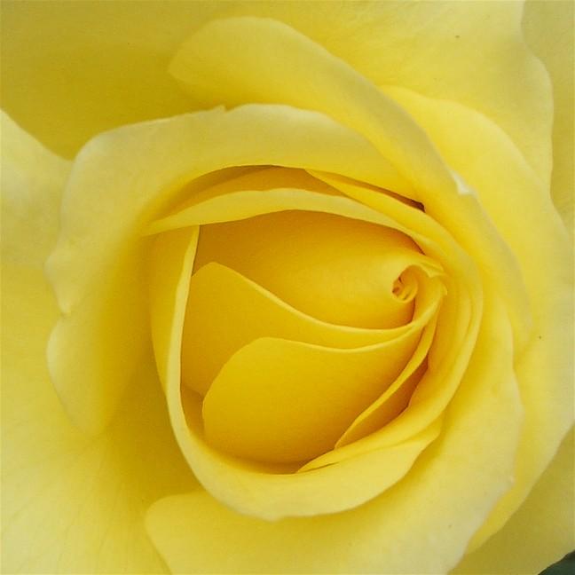 Earth Element - Yellow Flower